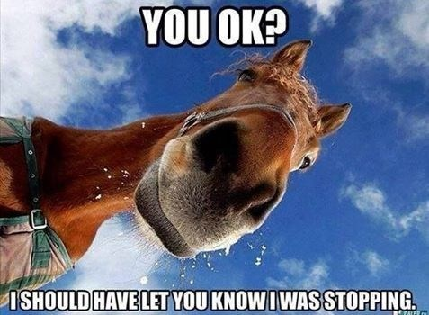 a-horse-looking-down-at-you-implying-it-