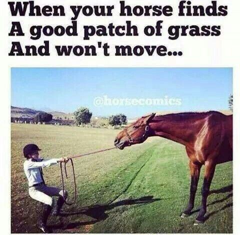 horse meme about horses refusing to move when they eat with pic of girl trying to pull a horse by the harness