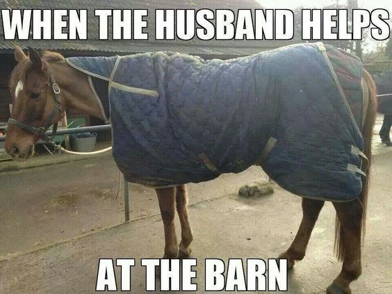 meme about a horse girl letting her husband help with horse care, with pic of horse messily wrapped in a blanket