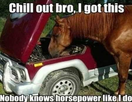pun about horsepower with a pic of a horse looking inside a car engine