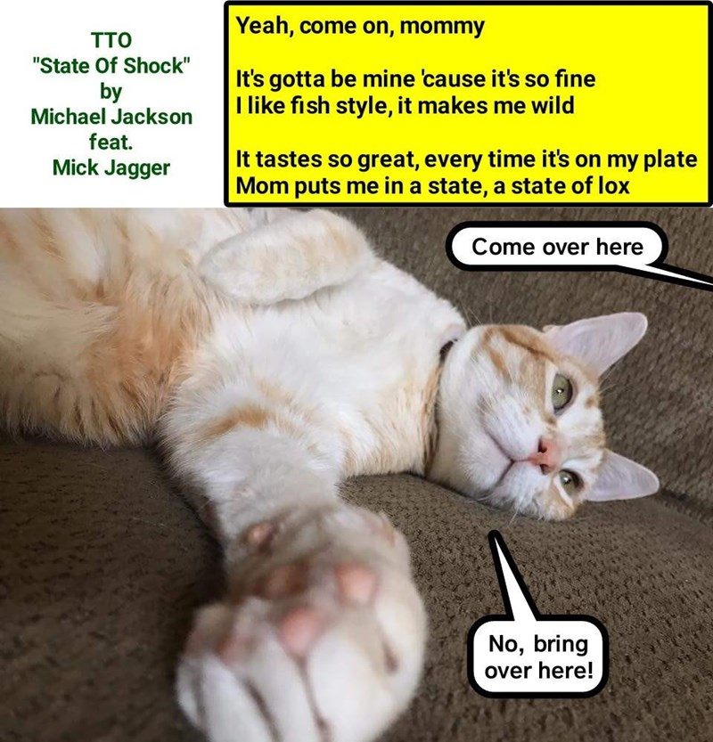 Fish Fave Lolcats Lol Cat Memes Funny Cats Funny