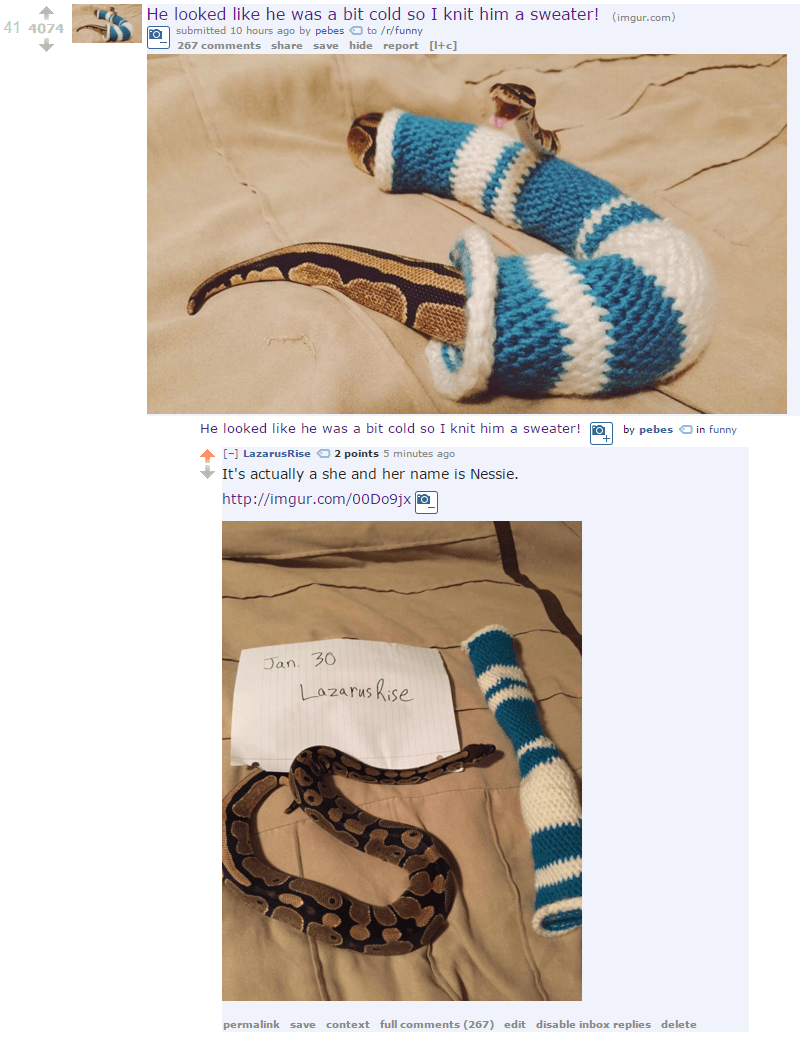 Cute picture of a snake in a sock/sweater.
