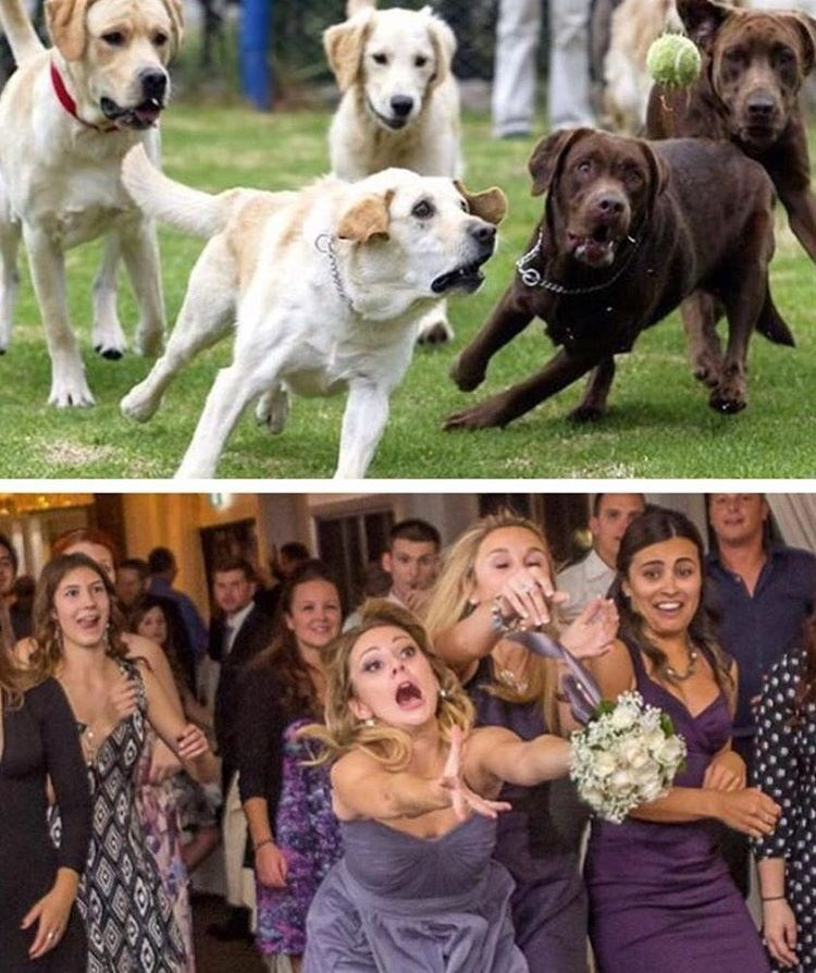 funny pictures of a dog running after a ball and bridesmaids trying to catch the bouquet of flowers.