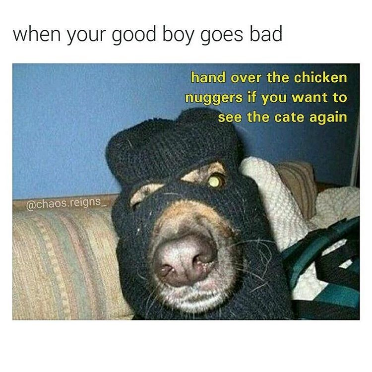 Funny picture of a dog wearing a balaclava and demanding all your chicken nuggets if you want to see your cat again, captioned as 'when your good boy goes bad'