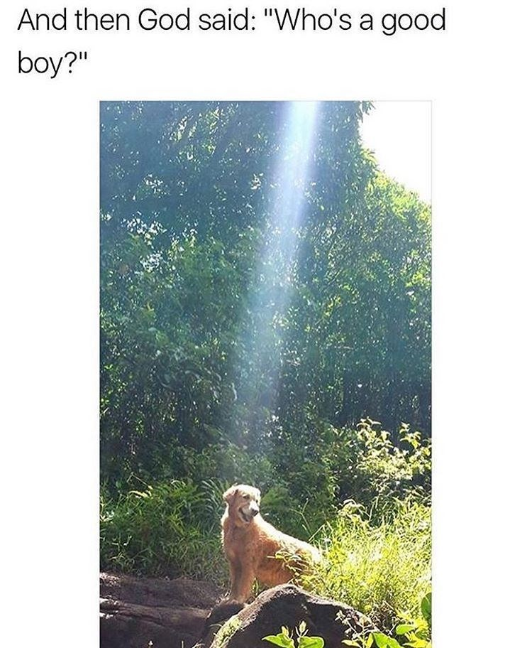 Great picutre of a dog in nature with a lens flare implying as the caption reads, 'who is a good boy?'