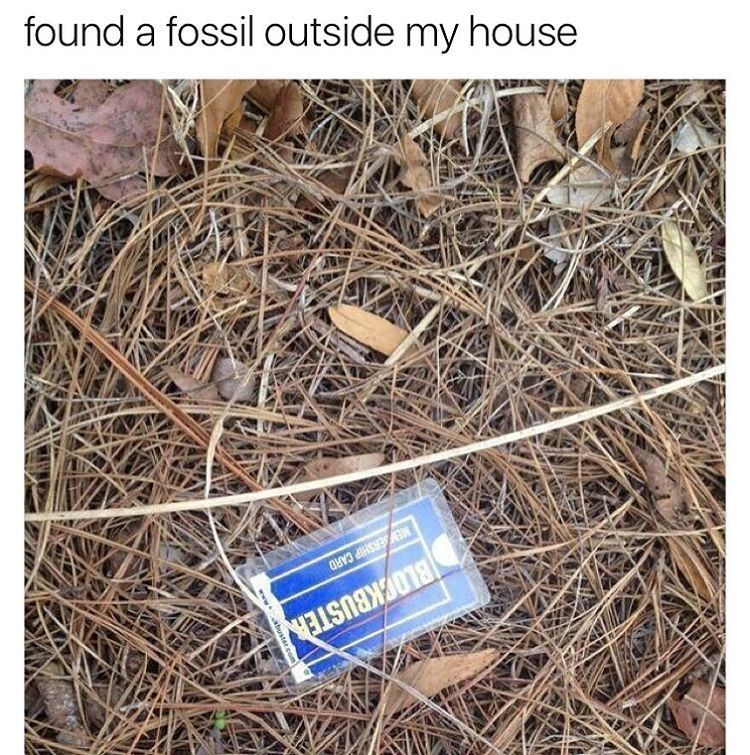 Caption of someone who found a fossil outside their house on a picture of a blockbuster card in the woods.