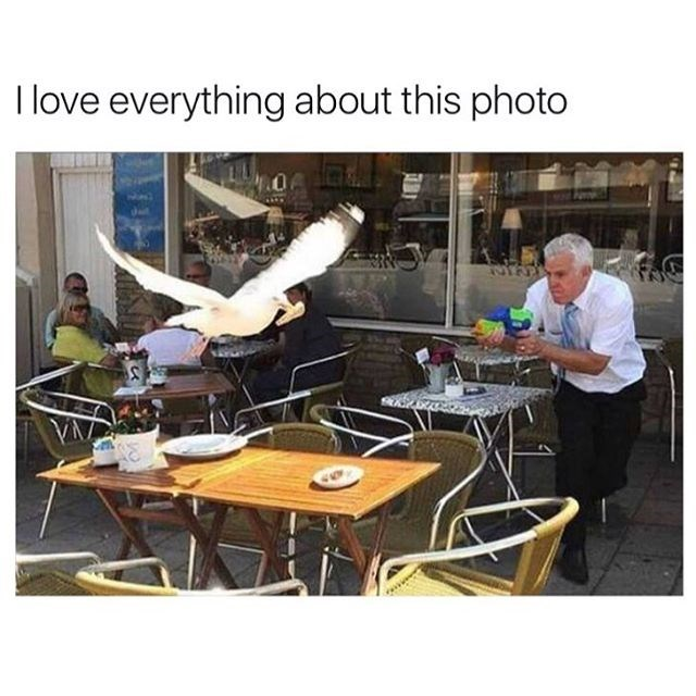 Funny image/meme of a bird flying at a restaurant table, where a waiter is waiting and pointing a water gun at it.