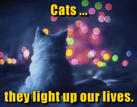 Cat meme about how the furry friends light up our lives over a pic of a white cat looking onto the blurred lights of the city.