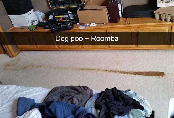 snapchat - Property - Dog poo + Roomba