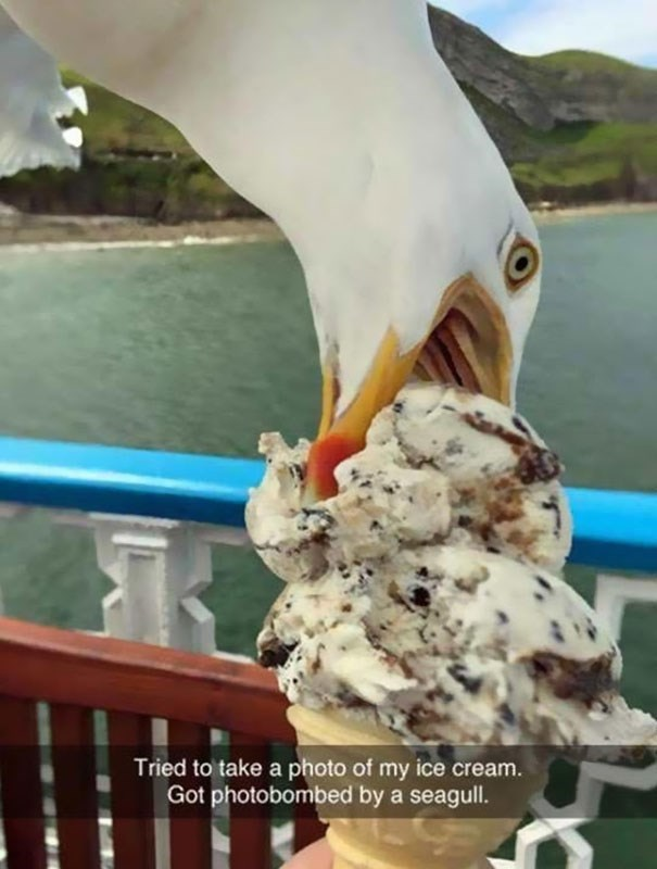 snapchat - Ice cream - Tried to take a photo of my ice cream. Got photobombed by a seagull.