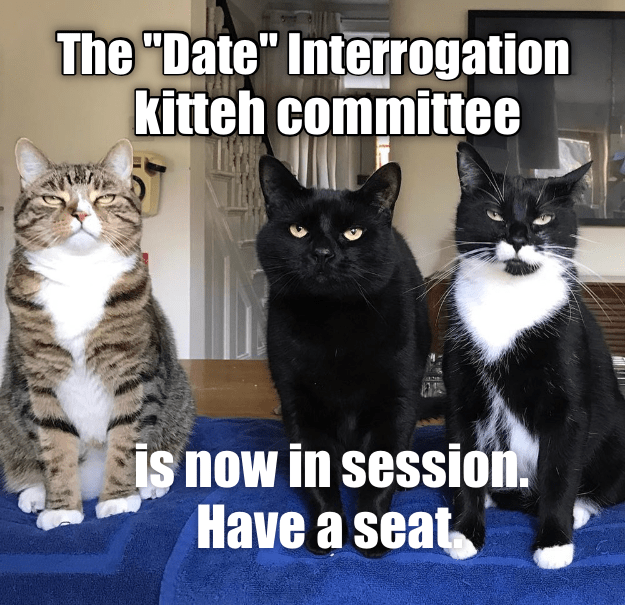3 Cats listening dubbed the Date Interrogation Kitten Committee as a cat meme