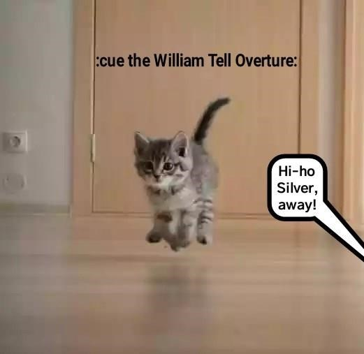 Cute cat meme of a kitten skipping across the wooden floor.