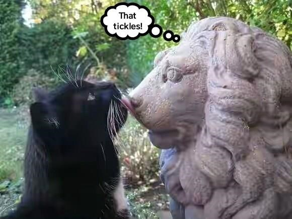 Cat licking a lion statue with a though bubble on the statue saying THAT TICKLES