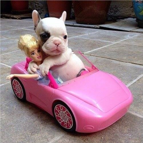 Funny meme of a puppy dog in a small pink convertible with Barbie and he is all over her.