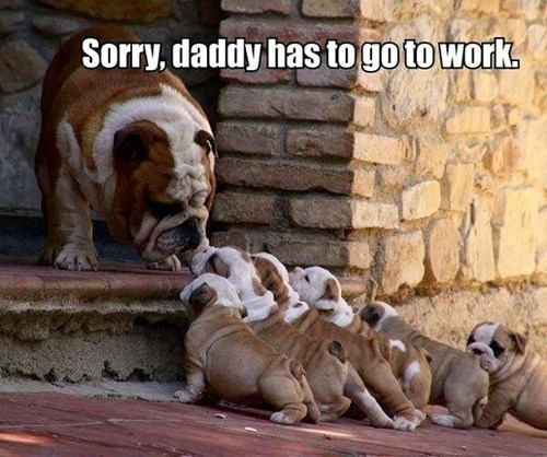 Funny large bulldog meme saying good by to his puppies as daddy goes to work.