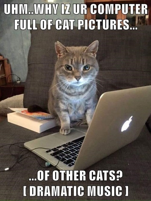 Meme of a cat on your mac computer and asking why you have pics of other cats.