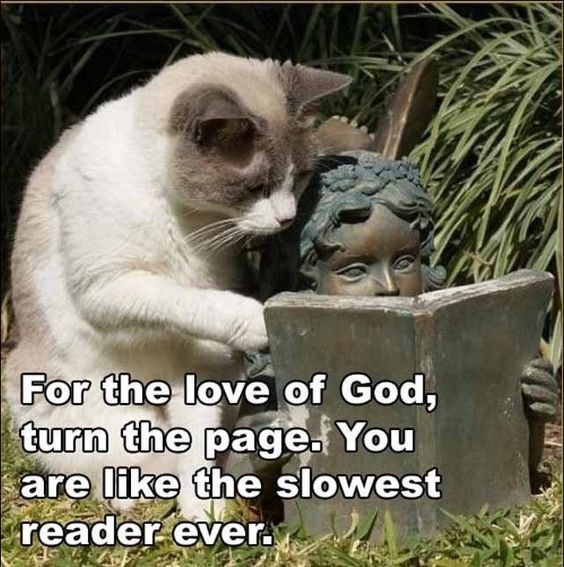 Cat meme of kitty reading a book with a statue who is like the slowest reader ever.