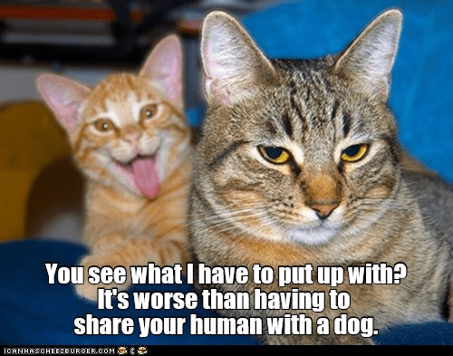 Two funny cats, one is serious and the other is goofing around.