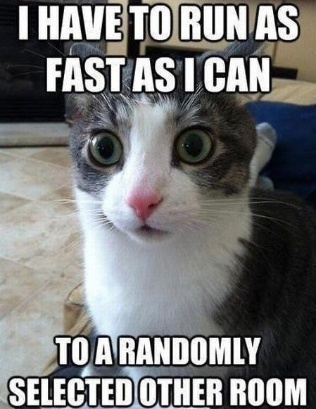 Cat meme about running really fast into another room for no reason.