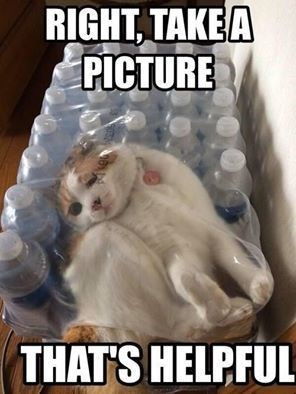 Meme of a cat stuck in a plastic wrap of water bottles, and a caption joking how helpful it is to take a picture of it.