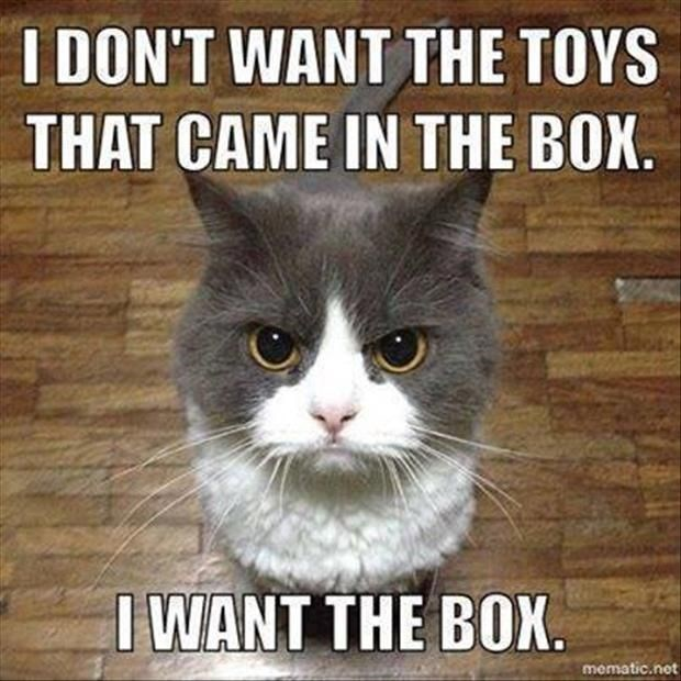 Cat meme of a furry kitty that is angry because he wants the box, not the toys that came in it.