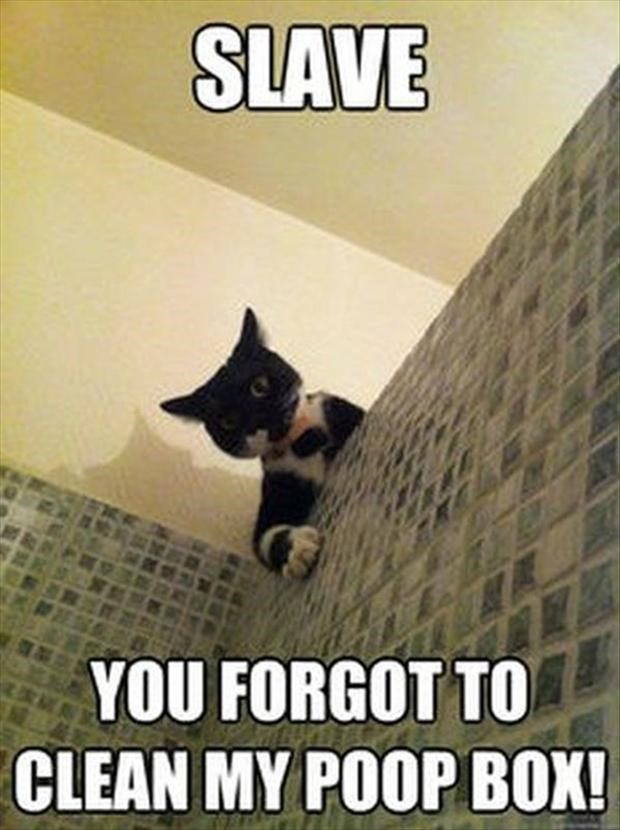 Cat meme of cat standing over the bathroom stall staring down at someone, with a caption about how you forgot to clean his litter box.
