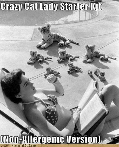 Crazy Cat Lady NON-allergenic version - woman by the pool with cat stuffed animals.