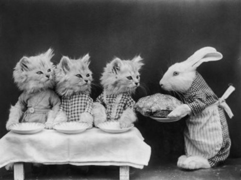 black and white vintage cat meme with rabbit.