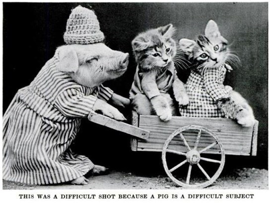 vintage cat meme of a pig pushing kittens in a wagon