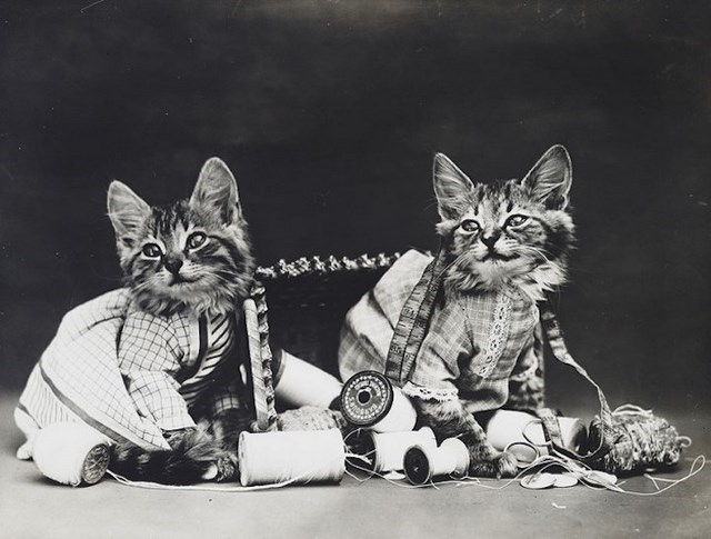 vintage cat pictures as tailors.