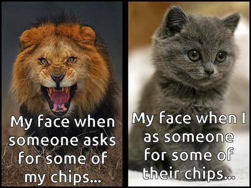 cat meme about asking for some chips from someone