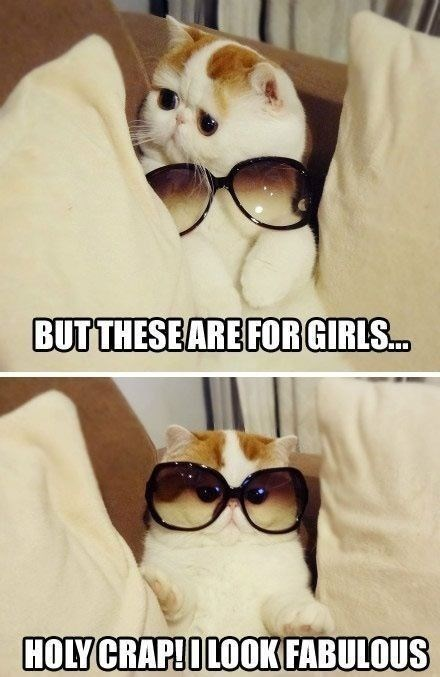 Cutest cat ever looks cuter in meme of over sized sun glasses.