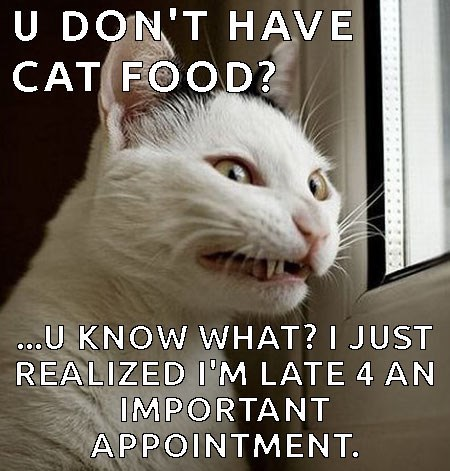 Cat meme of kitty having second thoughts about hanging out with you since you got no cat food.