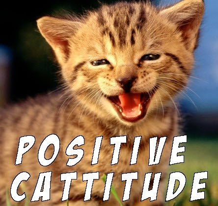 Cat meme about positive cattitude
