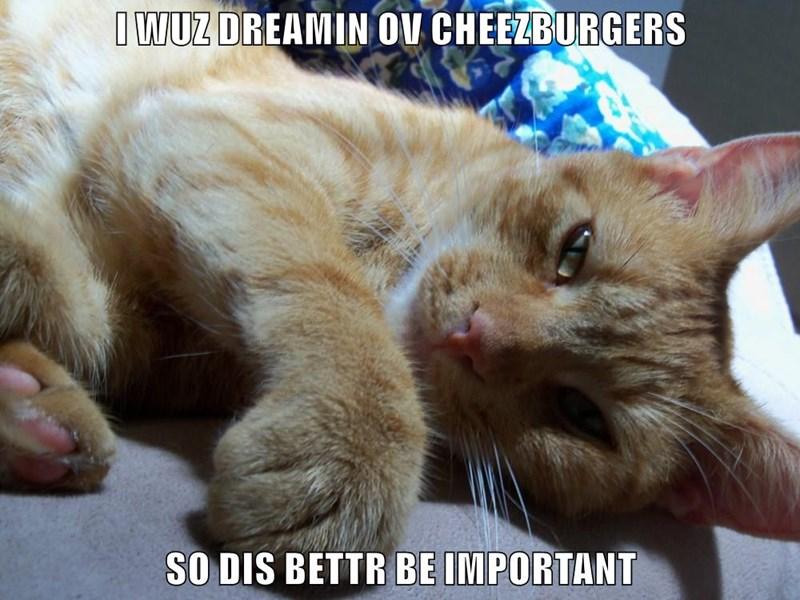 I WUZ DREAMIN OV CHEEZBURGERS SO DIS BETTR BE IMPORTANT