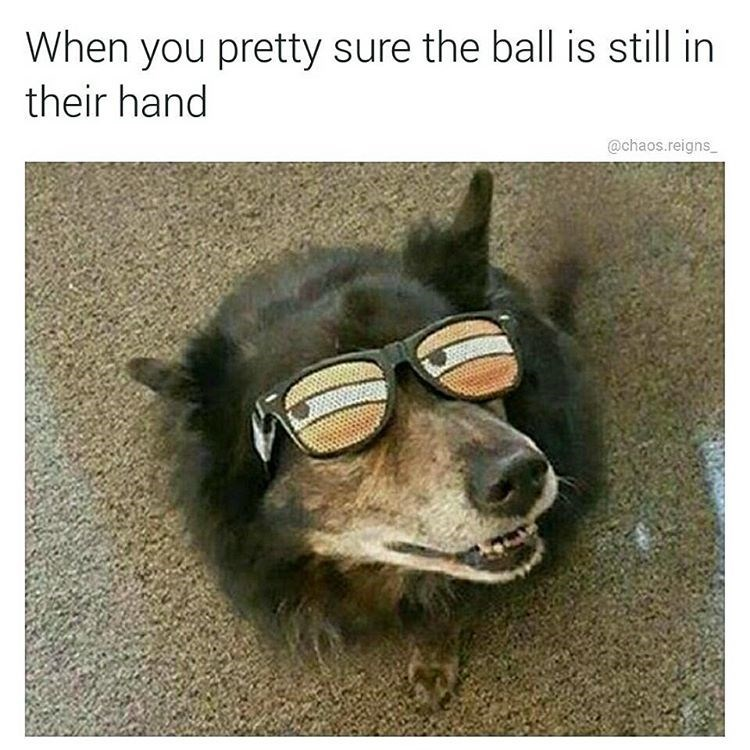Funny meme of a dog wearing glasses that makes him look suspicious, the text is about being pretty sure your owner still has the ball in their hands after pretending to throw it.