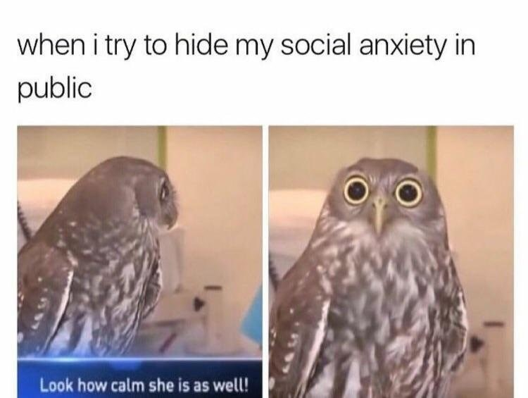 Funny meme about trying to hide anxiety in public featuring images of a scared looking owl.