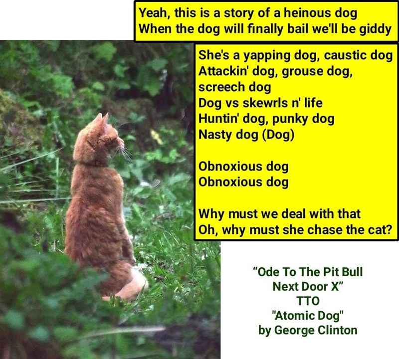 """Ode To The Pit Bull Next Door X"" (TTO ""Atomic Dog"" by George Clinton) (recaption http://tinyurl.com/mqoskfo"