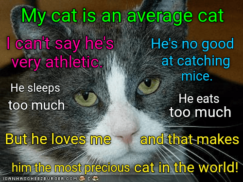 Cat - My cat is an average cat l can't say he's very athletic. He's no good at catching mice. He sleeps He eats too much too much But he loves me and thatmakes him the most precious CANHASCHEE2EURGER COM cat in the world!