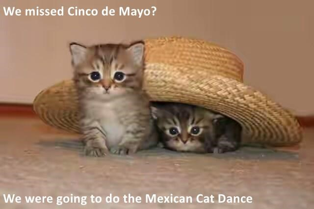 We missed Cinco de Mayo? We were going to do the Mexican Cat Dance