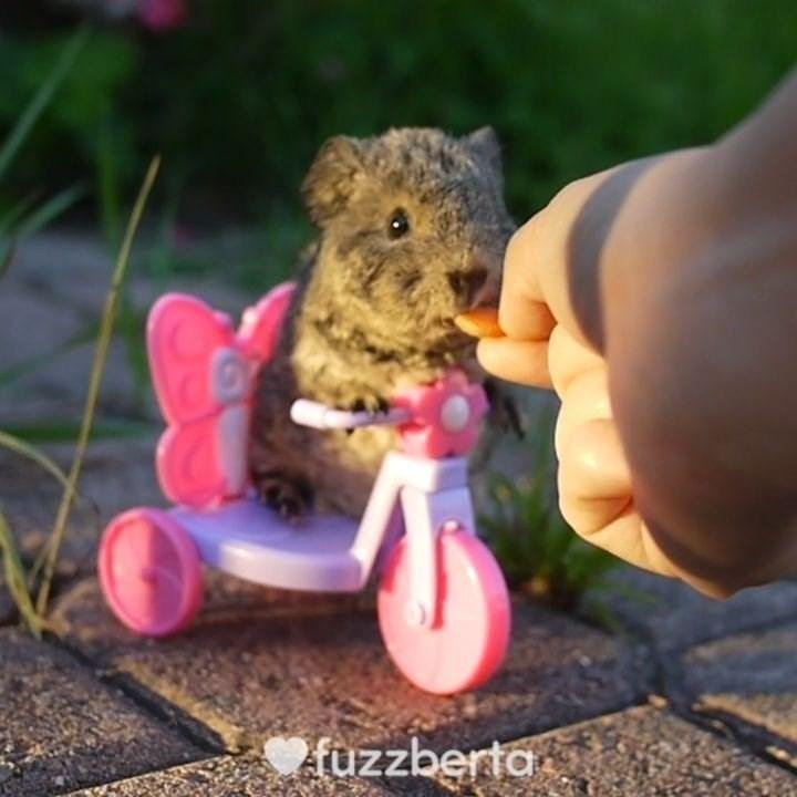 Hand - fuzzberta