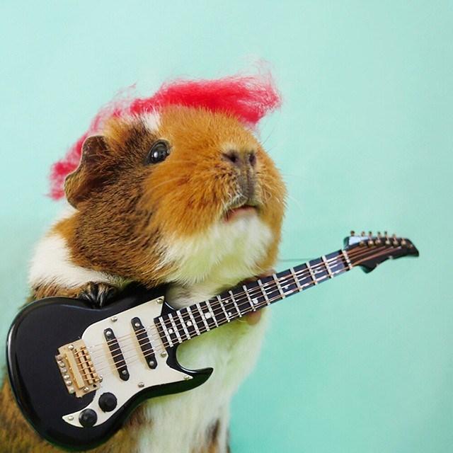 Guitar - dillo