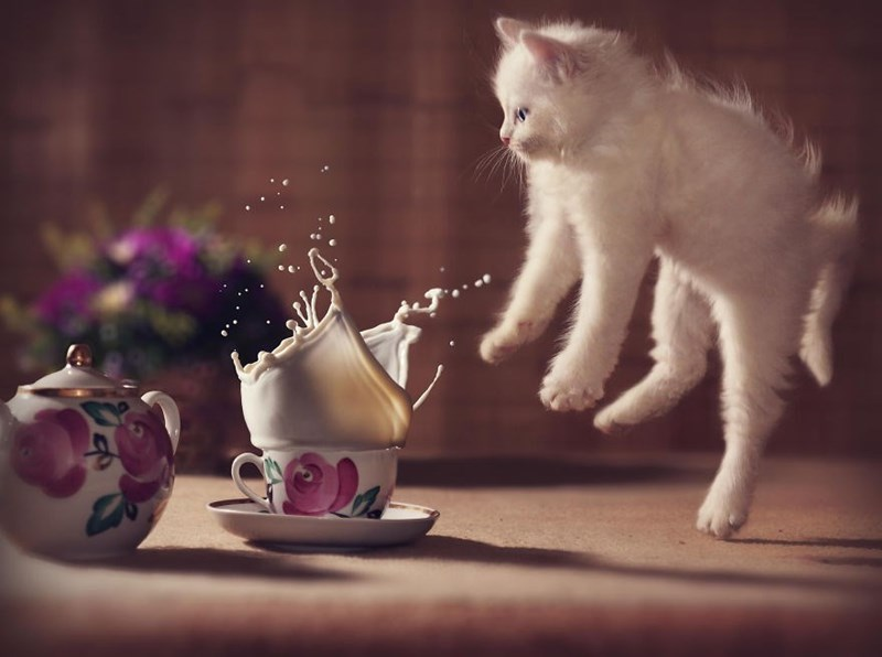 Perfectly time photo of a milky white cat jumping into the air when something splashes into his milk.