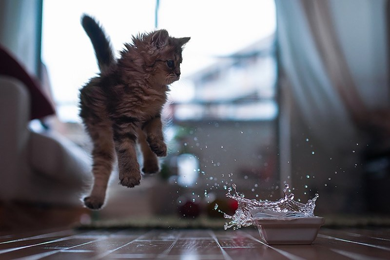 Perfectly timed photo of cat jumping in air when something splashes in his water bowl.