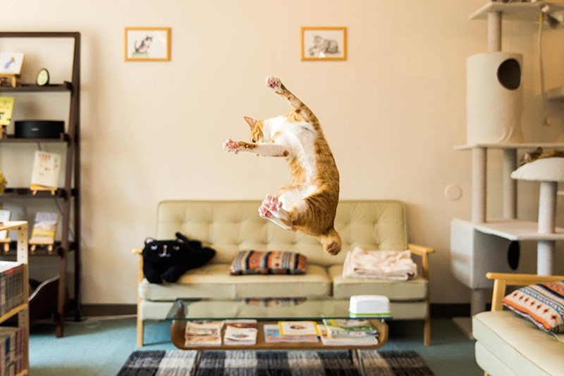 purr-fectly timed photo of someone's cat flying across their living room
