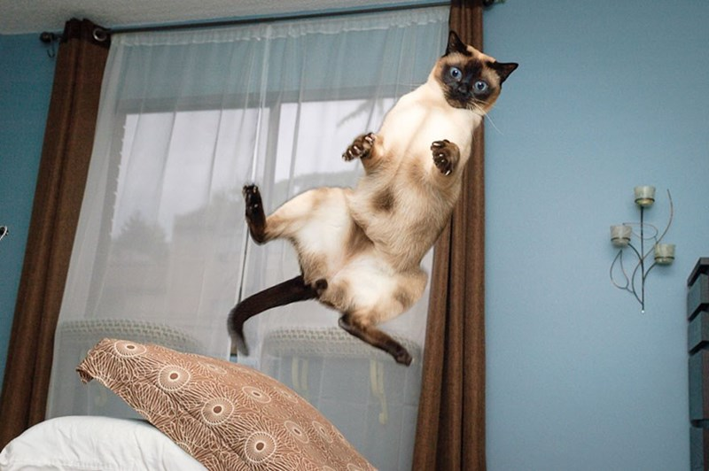 Freeze frame photo of a cat in mid-air in the bedroom.