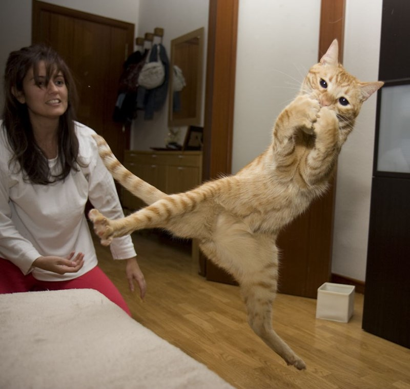 Flash photo of a cat doing a flying split kick.