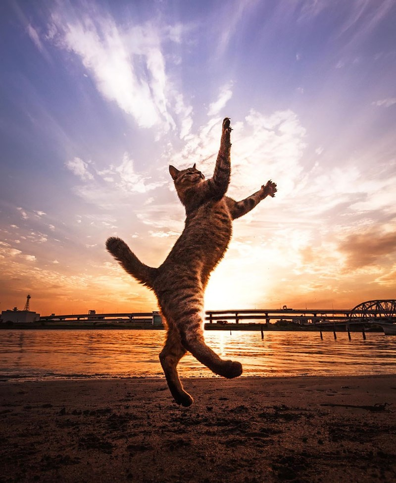 Awesome photo of a cat walking like an Egyptian at sunset.