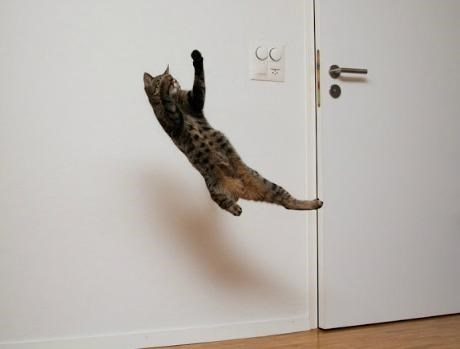 Cat jumping in the air like he about to catch a football pass.