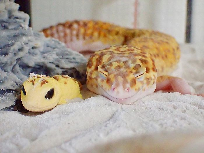gecko happy with his toy - Reptile